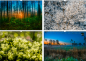 Preview: Nature January, February, March, April wall calendar photo calendar