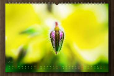 "Wall calender nature 2021 - ""Say it through the flower"" - january-picture"