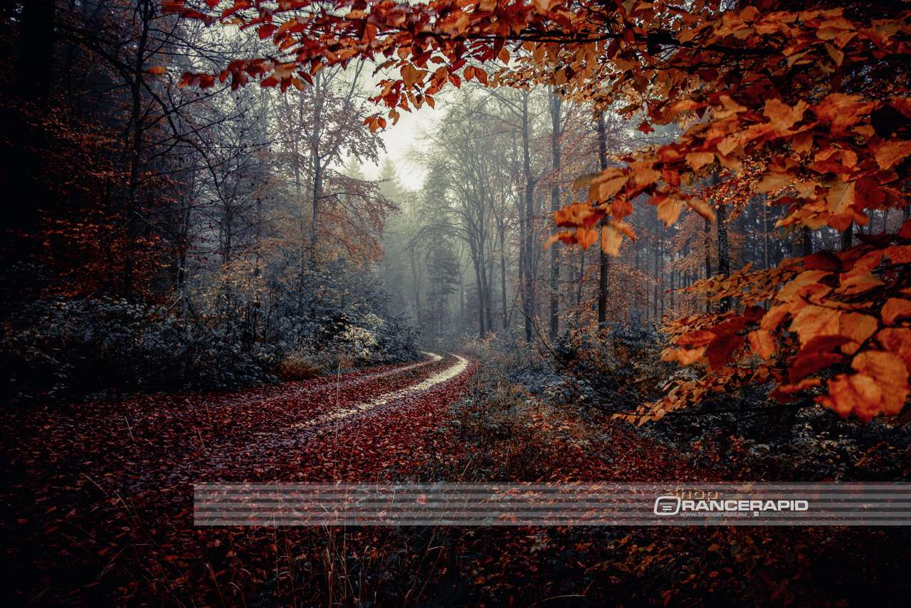 """Indian Summer Autumn Forest"" Ulm Lehr - wall picture, alu-dibond, acrylic, canvas, poster, photo 90x60 120x80 150x100"